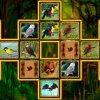 Bird Cards Match